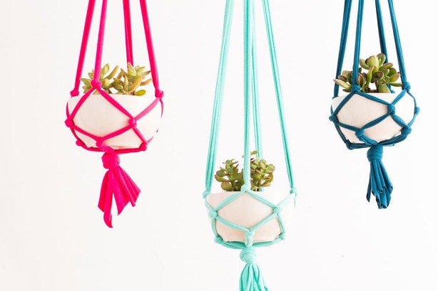 Colorful Hanging Plants